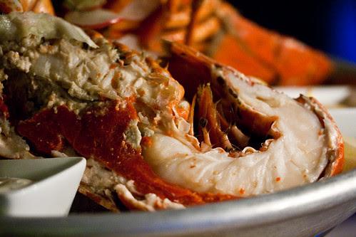 Lobster Safari-32