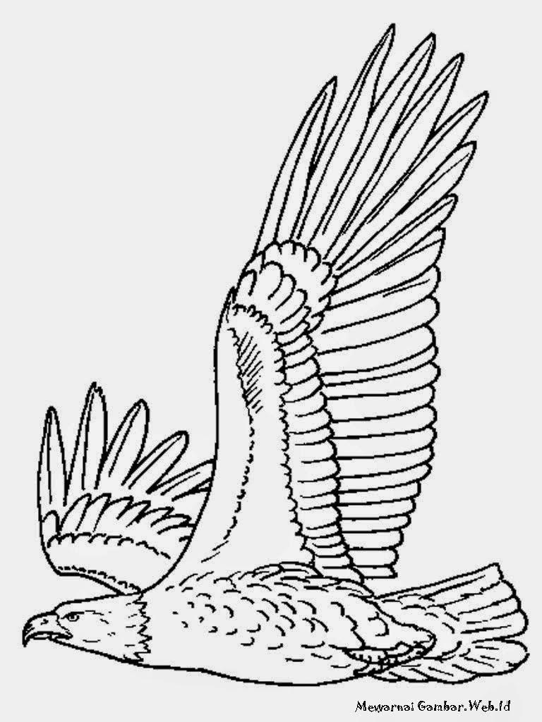 Mewarnai Gambar Burung Beo Wwwtollebildcom