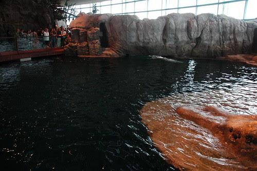 Beluga Tank