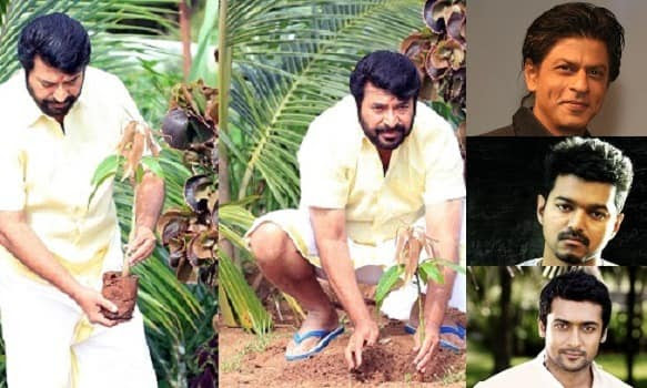 Mammootty takes up Fahadh My Tree challenge, challenges Vijay, Suriya and Shahrukh