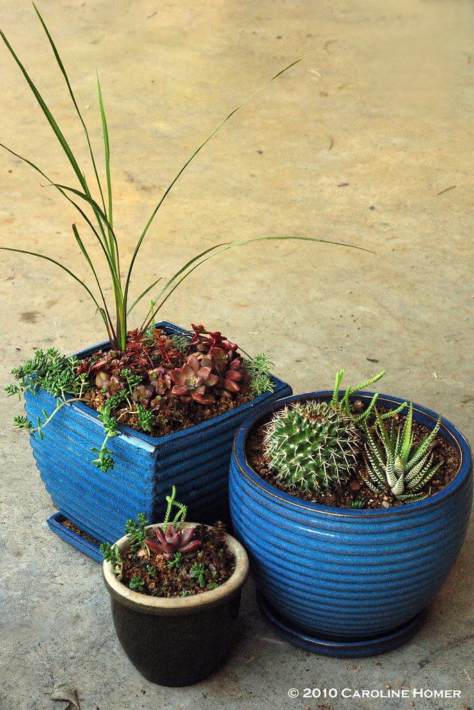 Trio of succulent pot gardens
