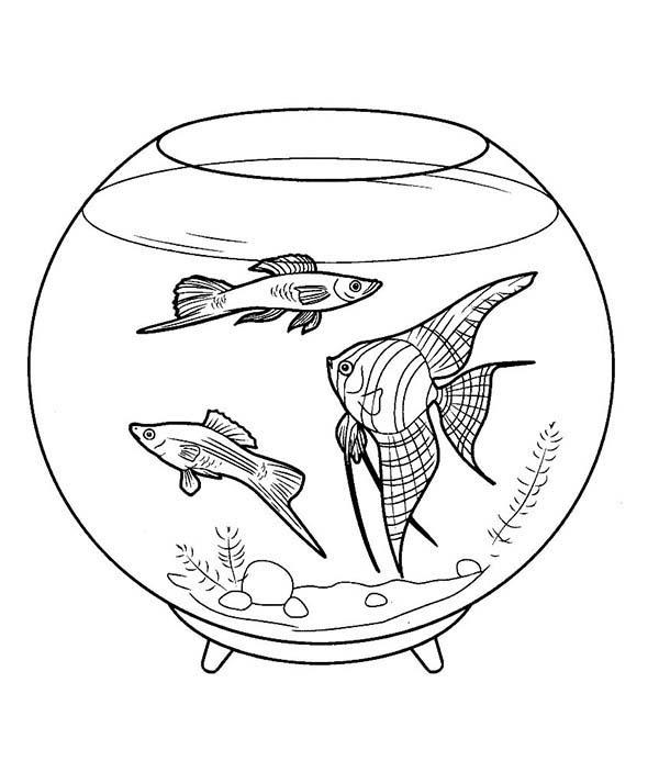 Pretty Fish Tank Coloring Page - NetArt