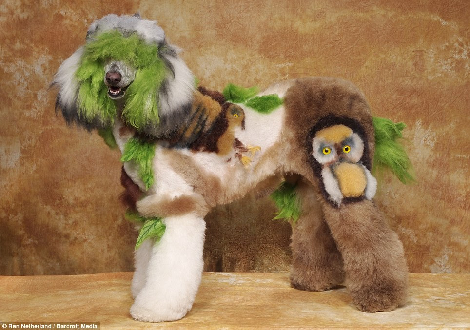 Colourful: Although it most definitely cannot fly, this poodle makes a decent owl