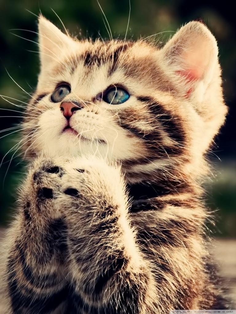 Cute Cat Wallpaper Hd Mega Wallpapers