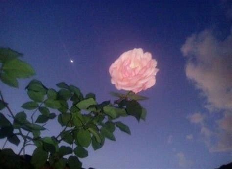 image result   anime aesthetic flowers retro