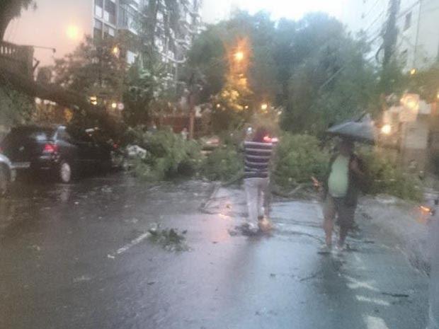 Árvore caiu na Rua Dona Veridiana, em São Paulo (Foto: Roger Modkovski/G1)