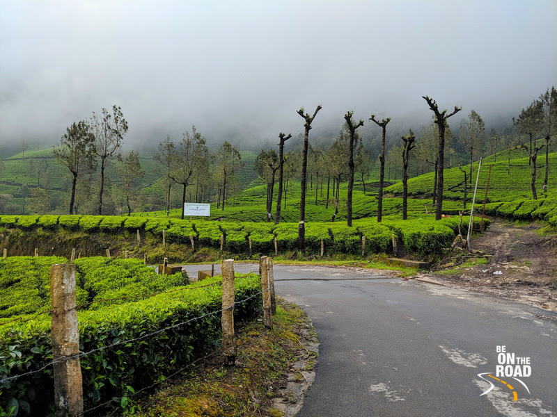 Perfect conditions for a monsoon holiday to Munnar, Kerala