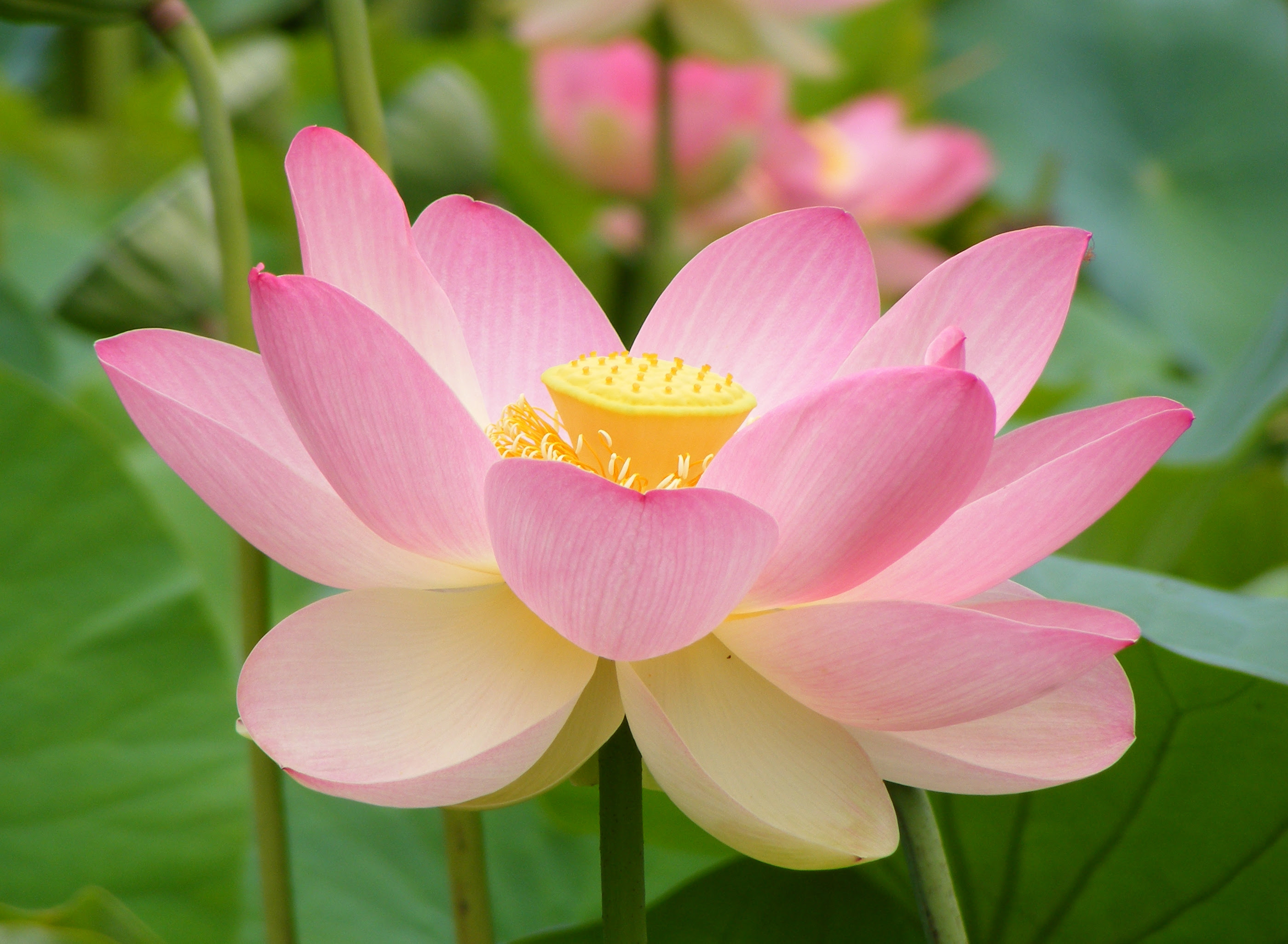 Zen Buddhist Chaplains At Beth Israel Medical Center Pallimed