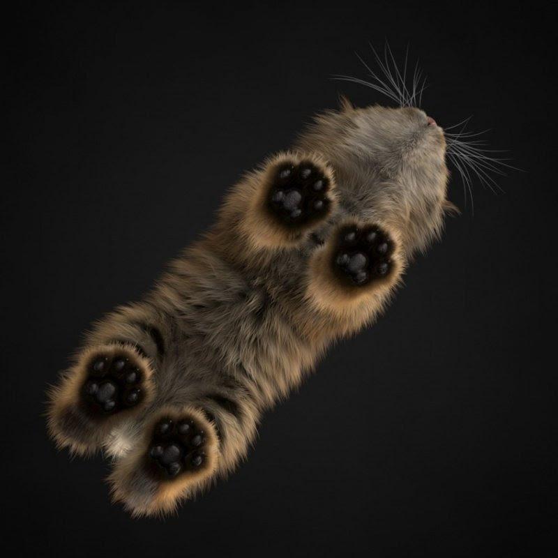 Фотографии животных с непривычного для нас ракурса