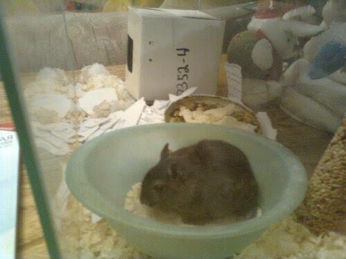 Мышка Машка