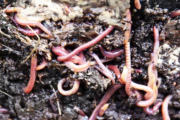 Zoologia | Phylum Annelida