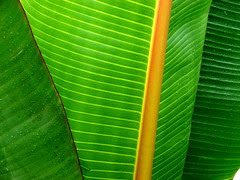 Banana leaves - hyderabad