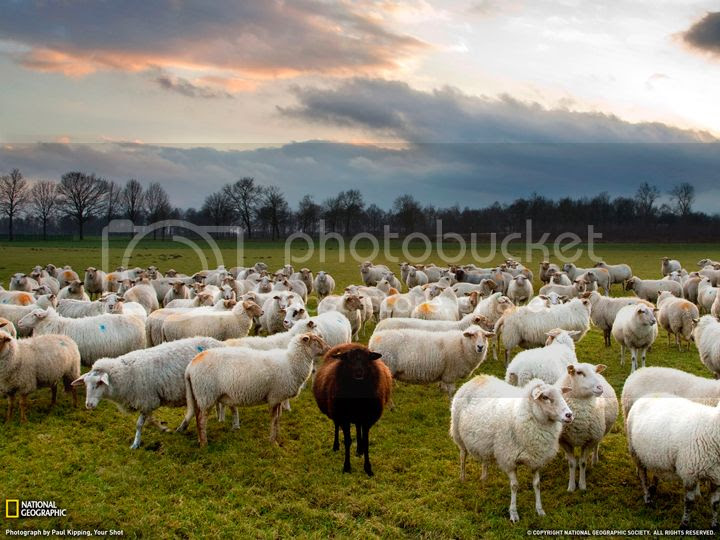 photo ovelha-negra_zpskagizqrt.jpg