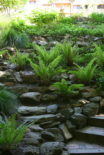 ferny bed