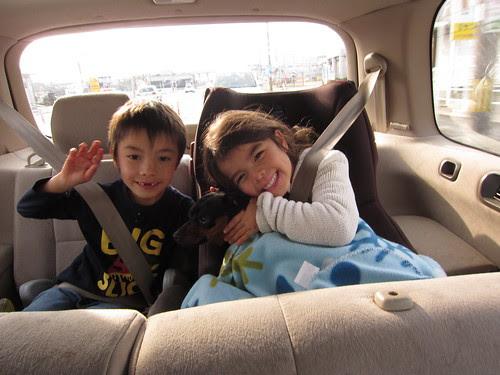 drive with zorro