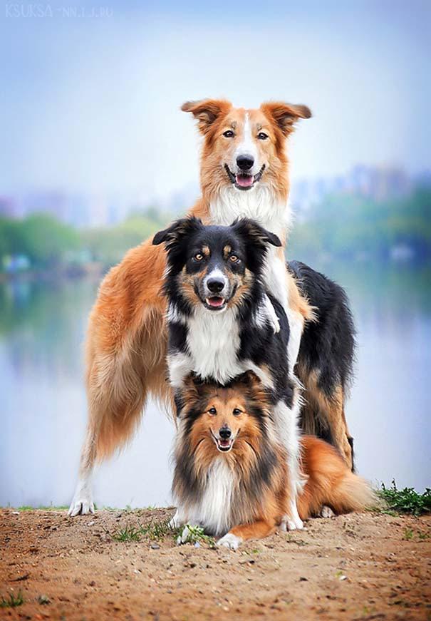 Υπέροχες φωτογραφίες φιλίας ζώων που θα σας φτιάξουν τη διάθεση (7)
