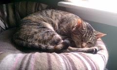 Happy nappy cat