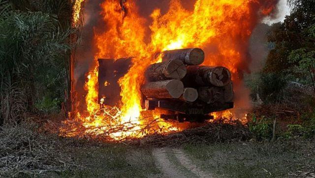PF combate extração ilegal de madeira no Maranhão