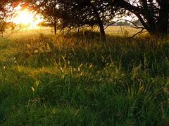 Summer Sun by FreeWine