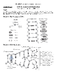 32 Dna Structure And Replication Worksheet Answers ...