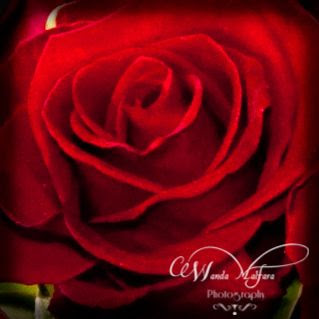 Mon Feb 11, 2013, Two red roses for my daughters