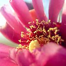 {cactus flower} by Brenda Smith