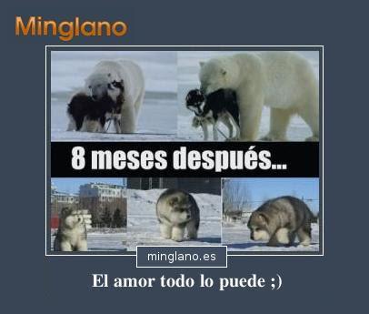Frases Con Imagenes De Monos