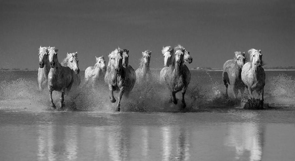 Φωτογραφίες Λευκά Άλογα