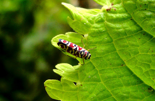 A little, little insect by Laura Olejua - www.lauraolejua.com