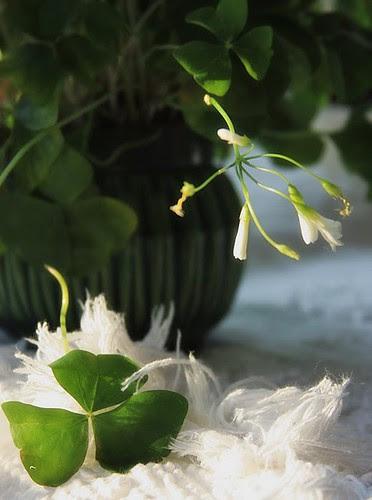 ...verde folha... by Menina Prendada -