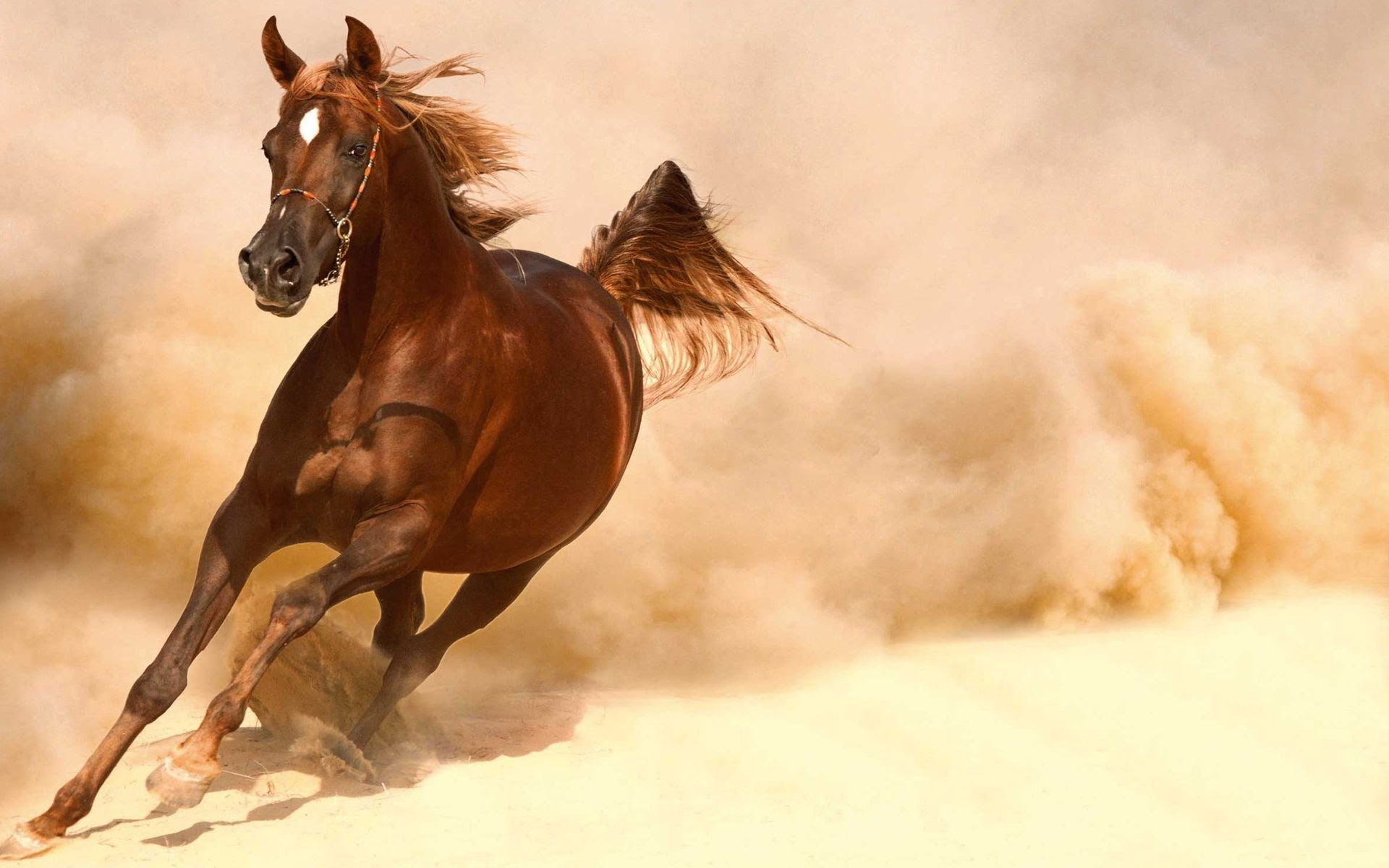 Beautiful Running Black Horse Hd Wallpaper Download Pictures