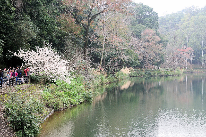 後慈湖 (28)