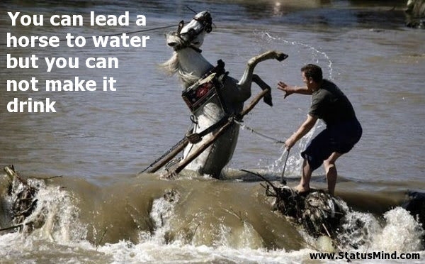 You Can Lead A Horse To Water But You Can Not Make Statusmindcom