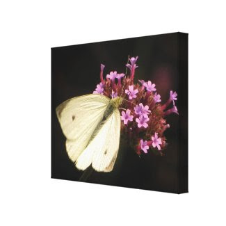 Butterfly on Flowers wrappedcanvas
