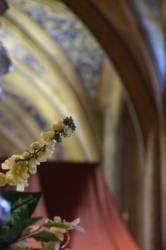 Cordes sur Ciel : La nef de l'église Saint-Michel