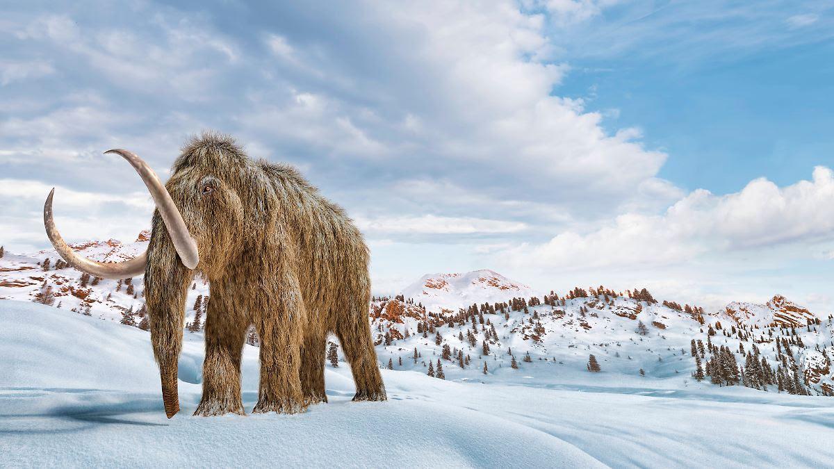 Finanzierung für Projekt steht: Forscher arbeiten an Mammut-Elefanten-Mix