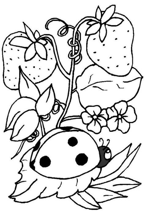 ladybug coloring pages  printables coloring pages