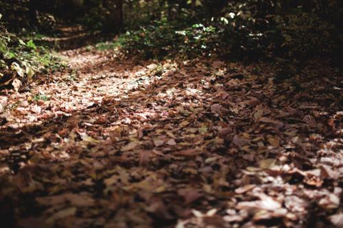fall19 copy