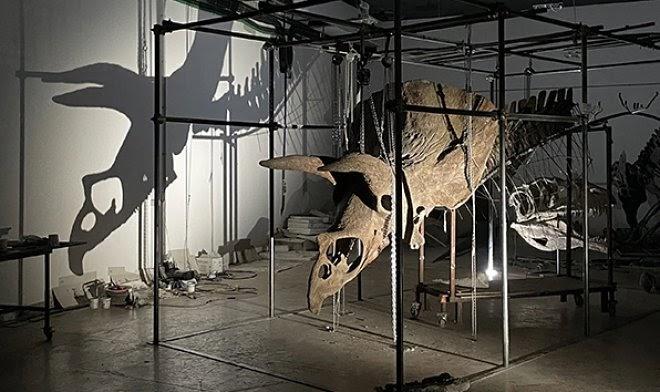 Самый большой в мире скелет трицератопса уйдет с молотка в Париже