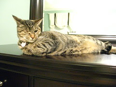 Maggie stretched out on the dresser