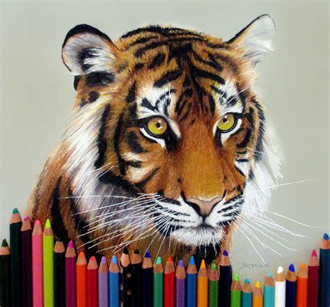 tiger colored pencil drawing  jasminasusak  deviantart