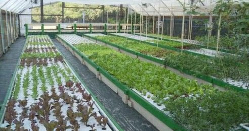 Commercial Aquaponics System Plans