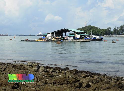 Fish farm off Lazarus Island