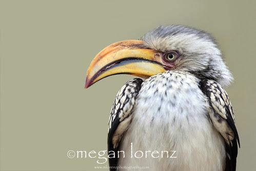 Banana Bird by Megan Lorenz
