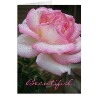 Beautiful Rose Ecclesiastes 3:11 Scripture Card