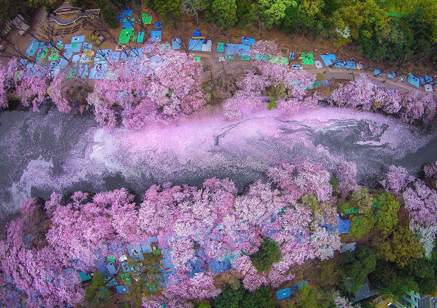 primavera-flores-cerezo-sakura-japon-national-geographic (4)