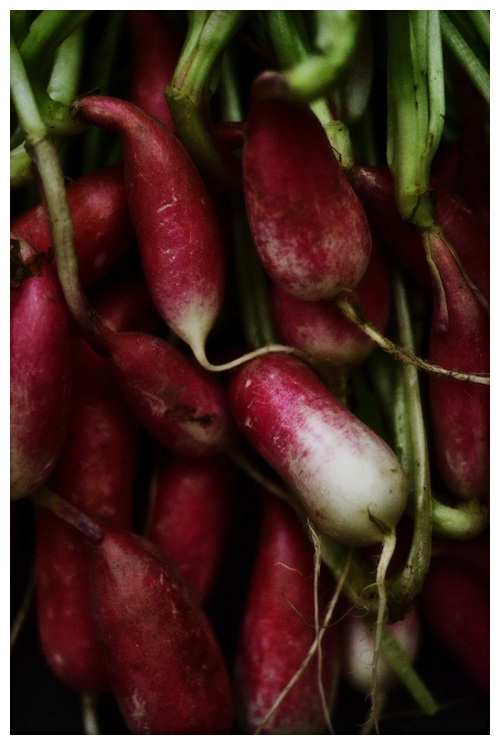 french breakfast radish© by Haalo