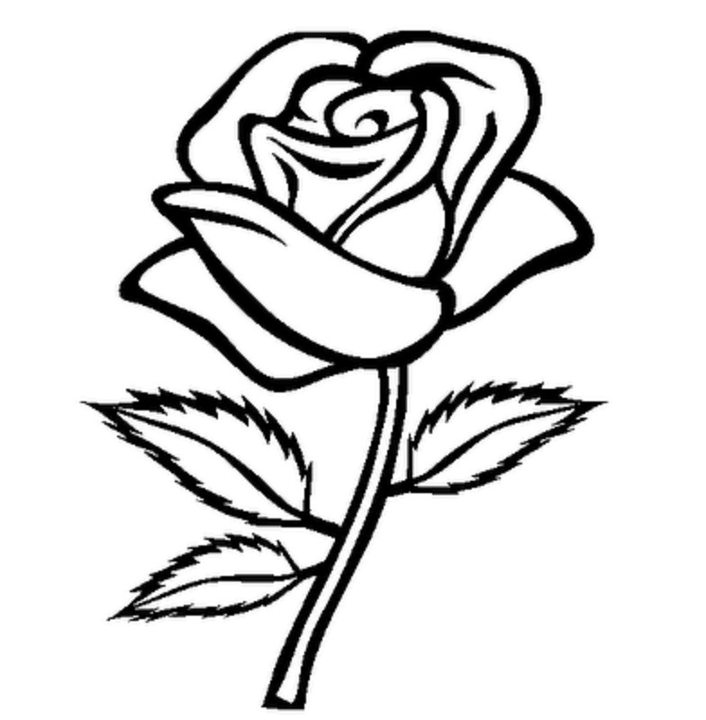 26 New Rose Flower Outline Drawing