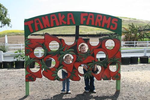 Tanaka Farms Strawberry Tour