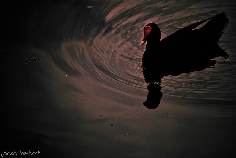 birdy in swampy